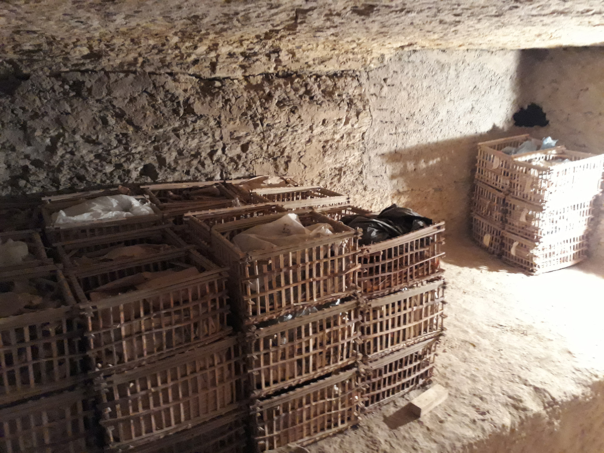 Reorganised skeletal remains now stored in the subterranean rooms in the tomb of Horemheb. Photo: Daniel Soliman.